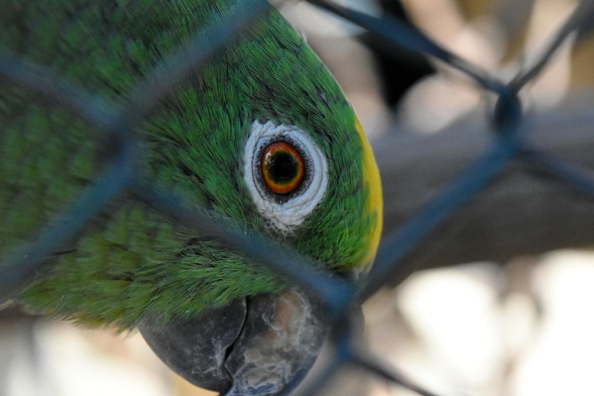 bird, wildlife, feather, parrot, animal, vertebrate, macaw, beak