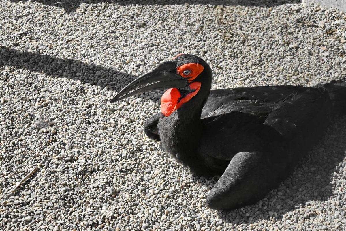 exotic, ornithology, tropic bird, wildlife, beak, animal, bird, nature