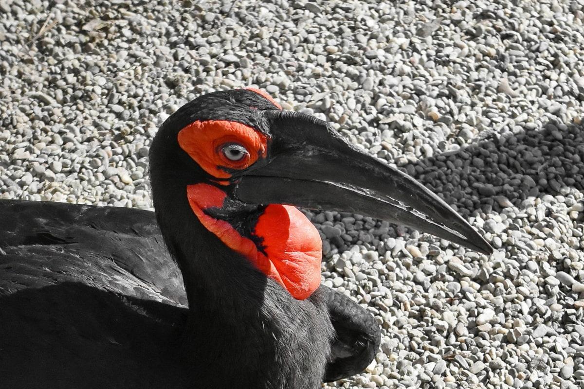 bird, wildlife, animal, beak, nature, wild, feather, outdoors