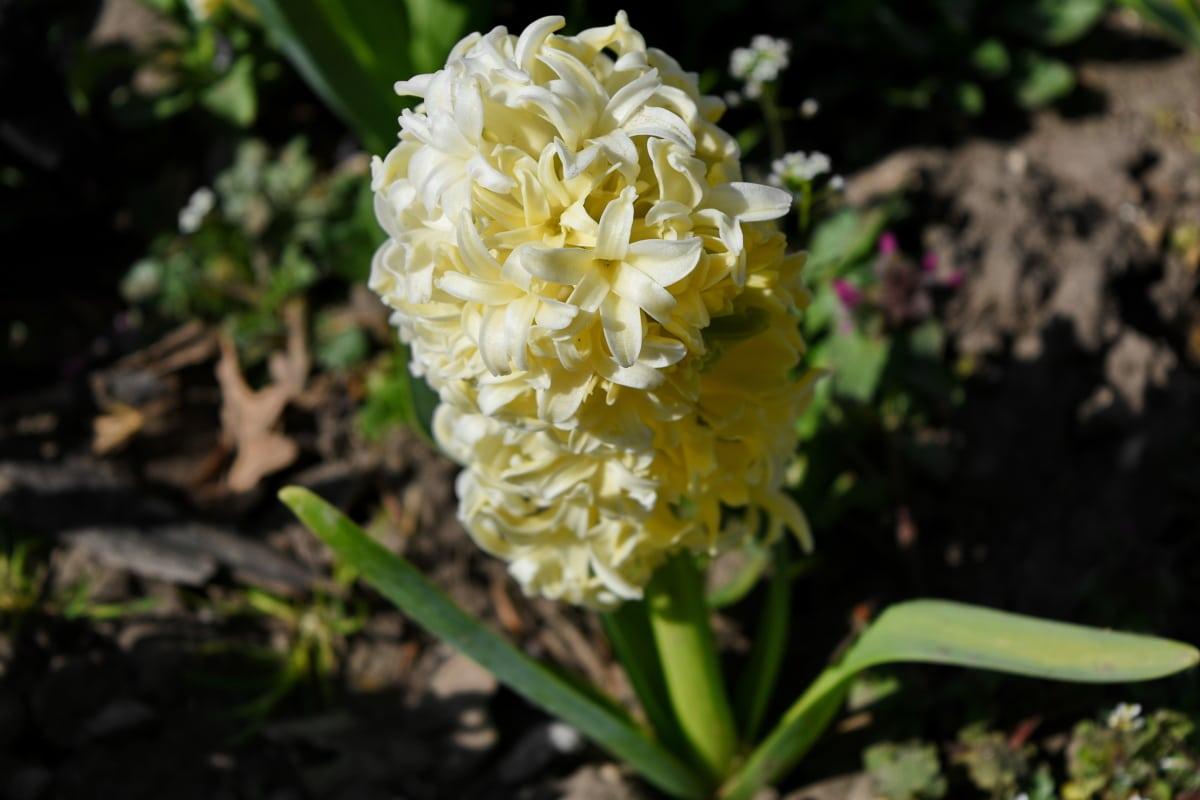 nature, flora, flowers, plant, flower, shrub, garden, leaf