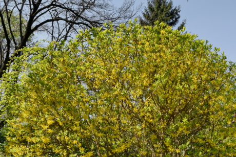 leaf, shrub, branch, nature, tree, landscape, plant, season