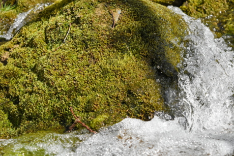 lichen, moss, water, nature, tree, rock, stone, stream