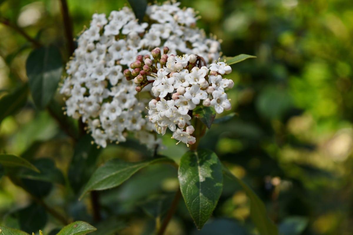 Біла квітка, квітка, цвітіння, завод, лист, природа, флора, рослина