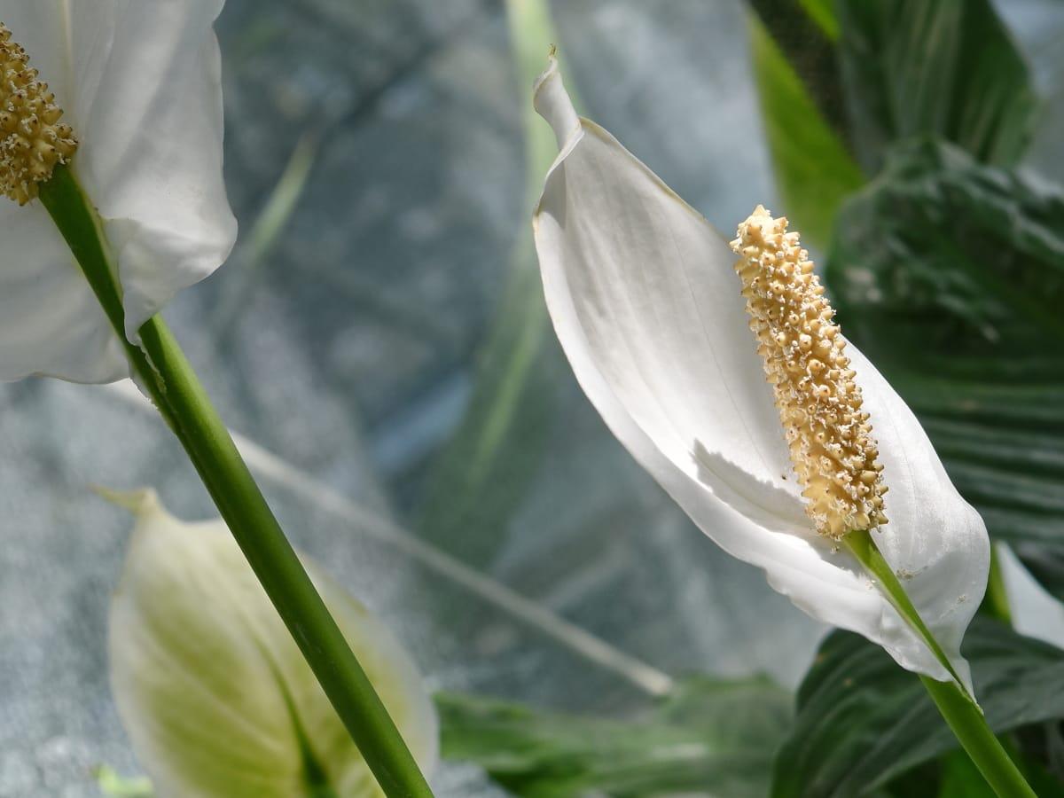 leaf, nature, plant, flower, summer, flora, bright, outdoors