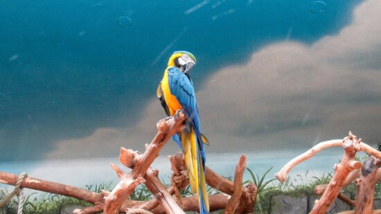 macaw, bird, parrot, outdoors, nature, tropical, summer, exotic