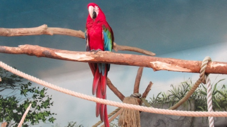 red, tropic bird, animal, parrot, macaw, wildlife, bird, beak