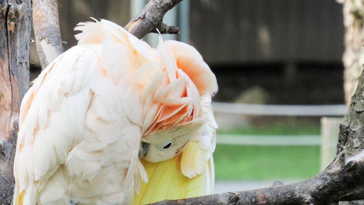 bird, parrot, nature, beautiful, outdoors, portrait, summer, color