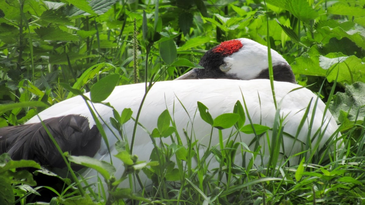 green grass, bird, nature, grass, wildlife, outdoors, tree, animal