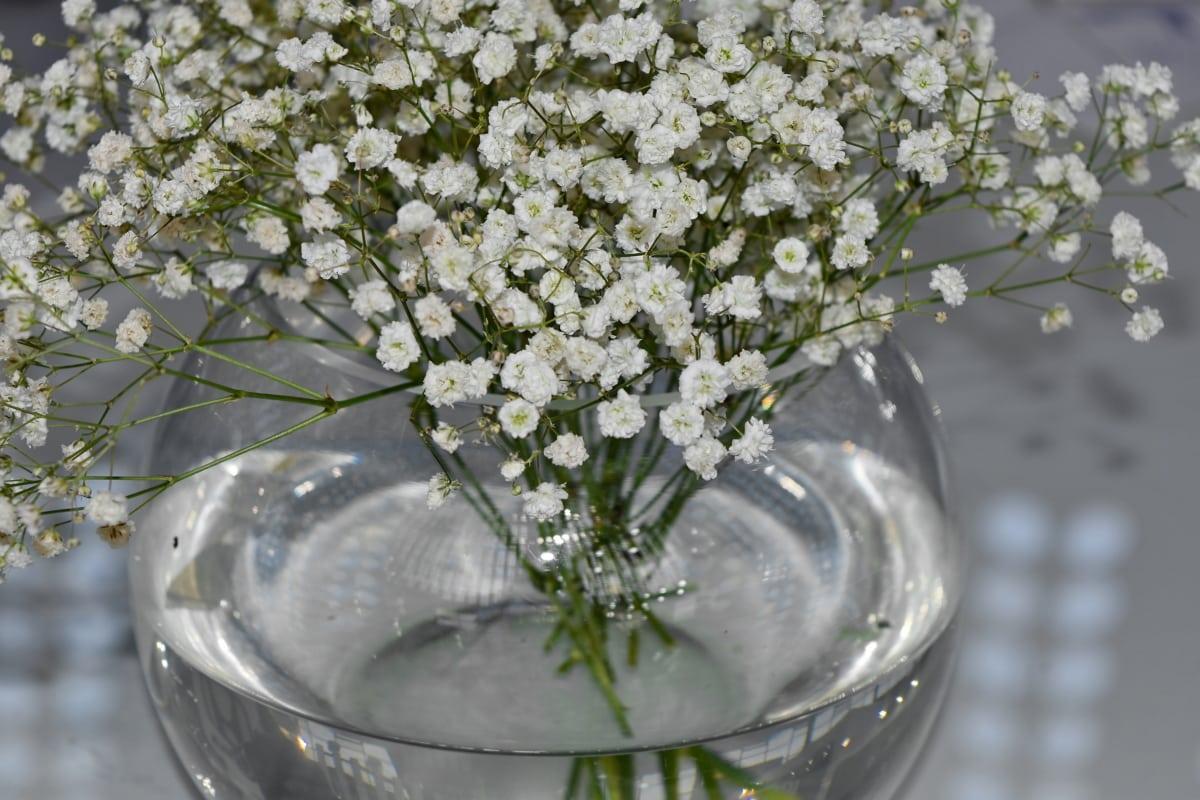 stadig liv, gennemsigtig, vase, plante, plante, blomst, natur, flora