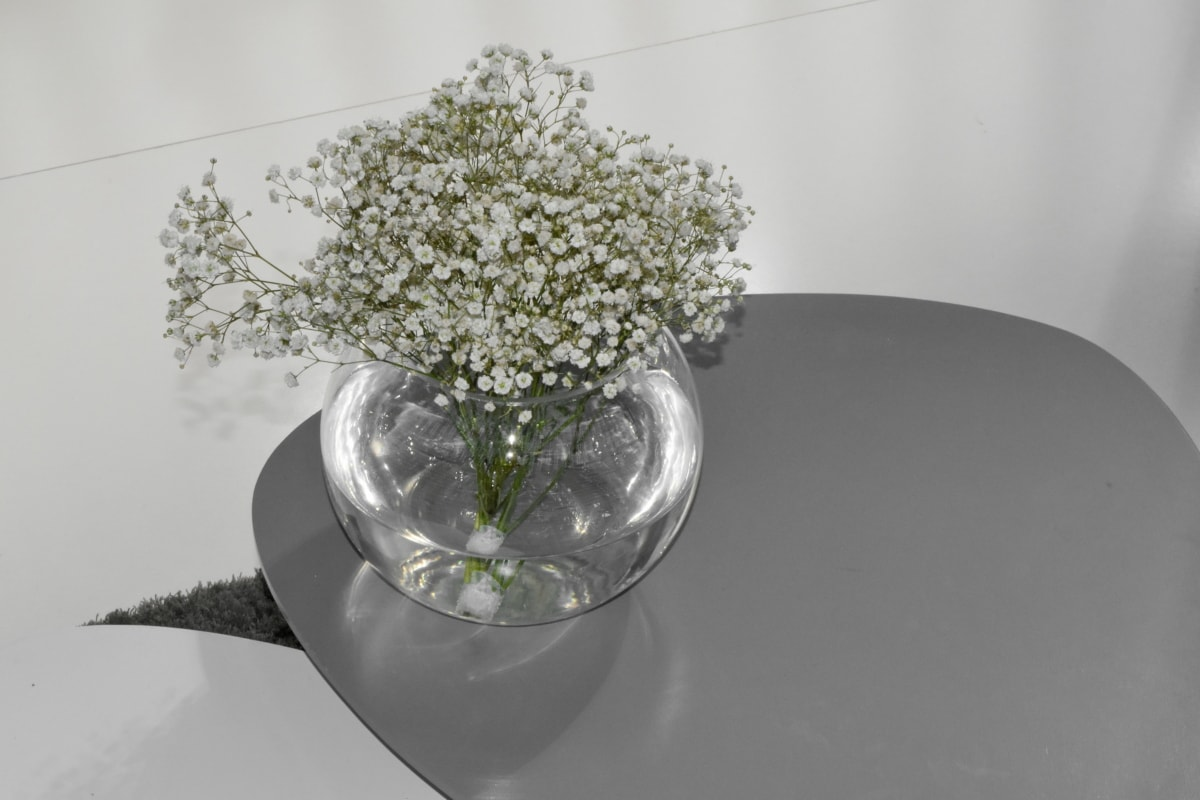 flowers, minimalism, still life, vase, glass, flower, nature, flora