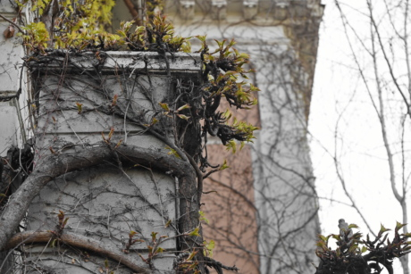 architectural style, ivy, wall, tree, branch, wood, nature, environment