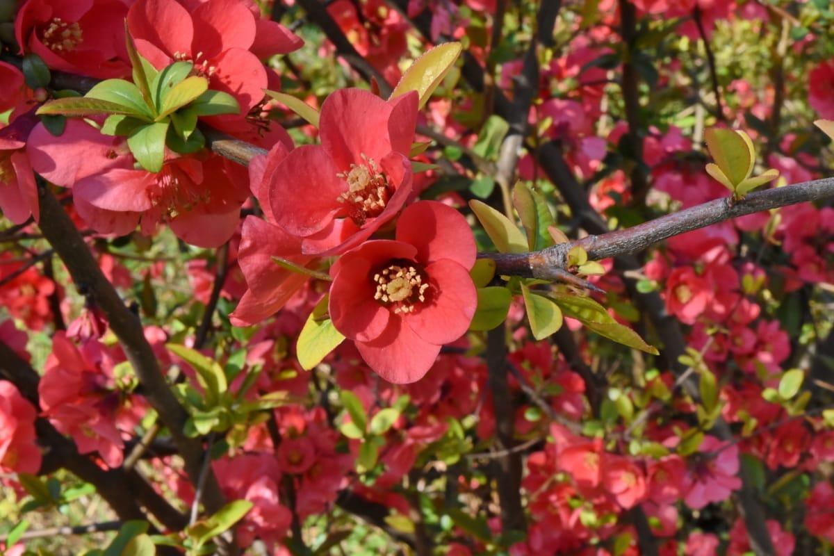 flower, leaf, tree, nature, flora, shrub, garden, plant