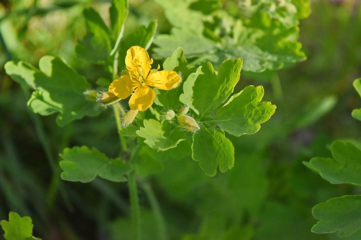 økologi, plante, natur, blad, blomst, sommer, haven, tæt på