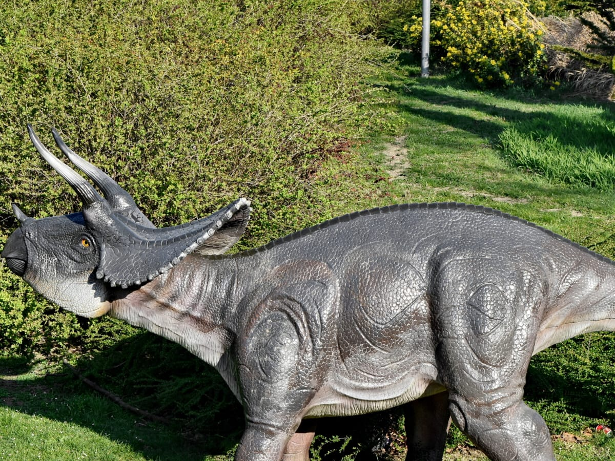 nature, faune, animal, dinosaure, sauvage, herbe, gros, Parc