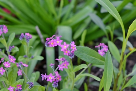 green grass, horticulture, pink, plant, herb, flora, nature, flower
