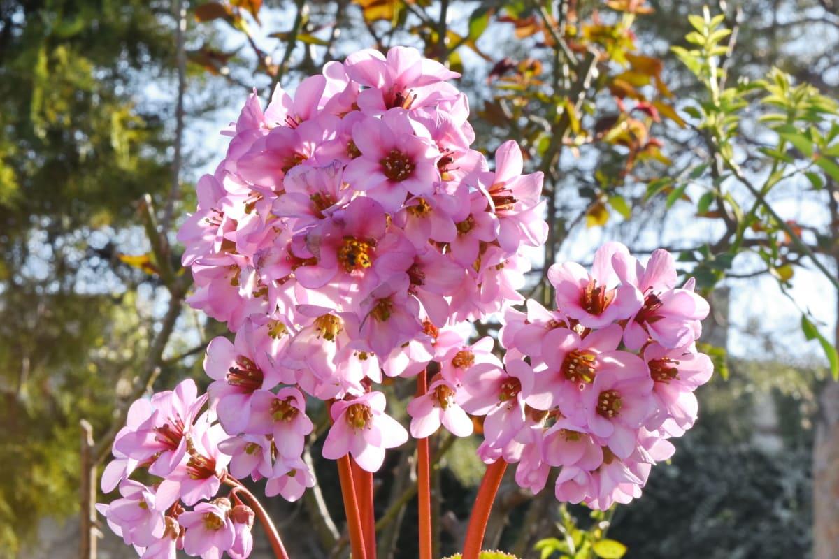 pinkish, spring time, branch, flora, plant, shrub, tree, flower