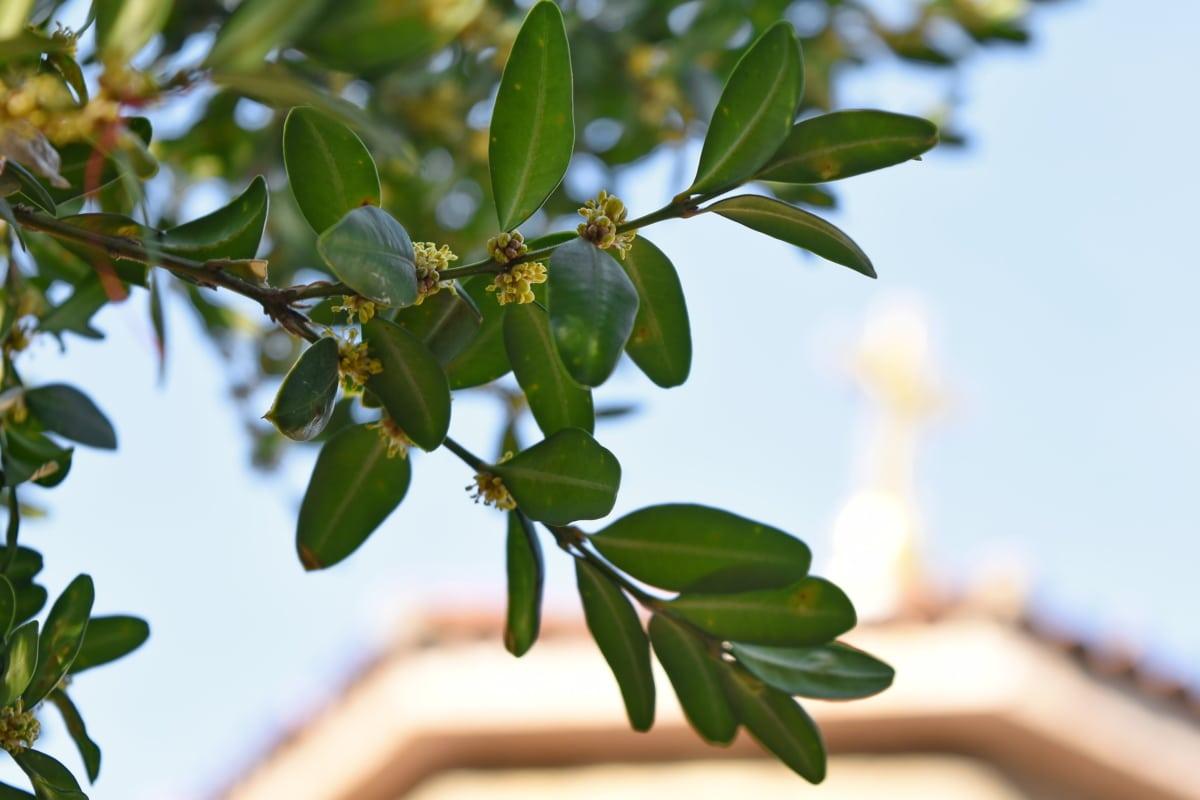 природата, дърво, флора, листа, клон, лято, на открито, градина