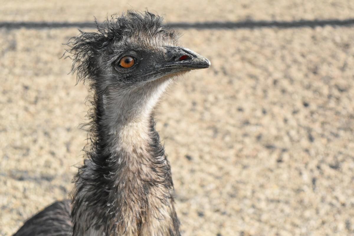 head, ostrich, portrait, safari, animal, avian, beak, bird