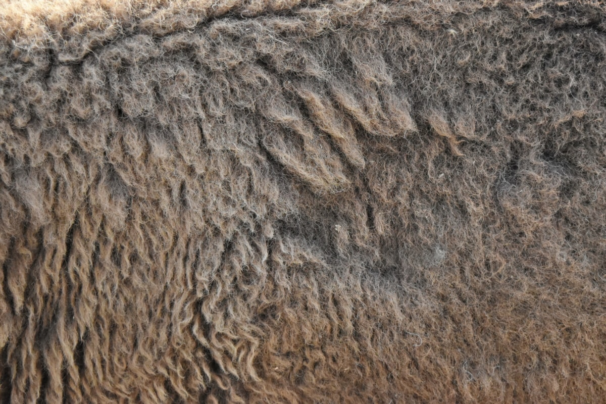 fur, skin, pattern, texture, wool, rough, background, nature