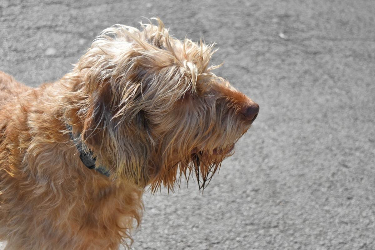 shepherd dog, dog, animal, canine, fur, cute, portrait, domestic