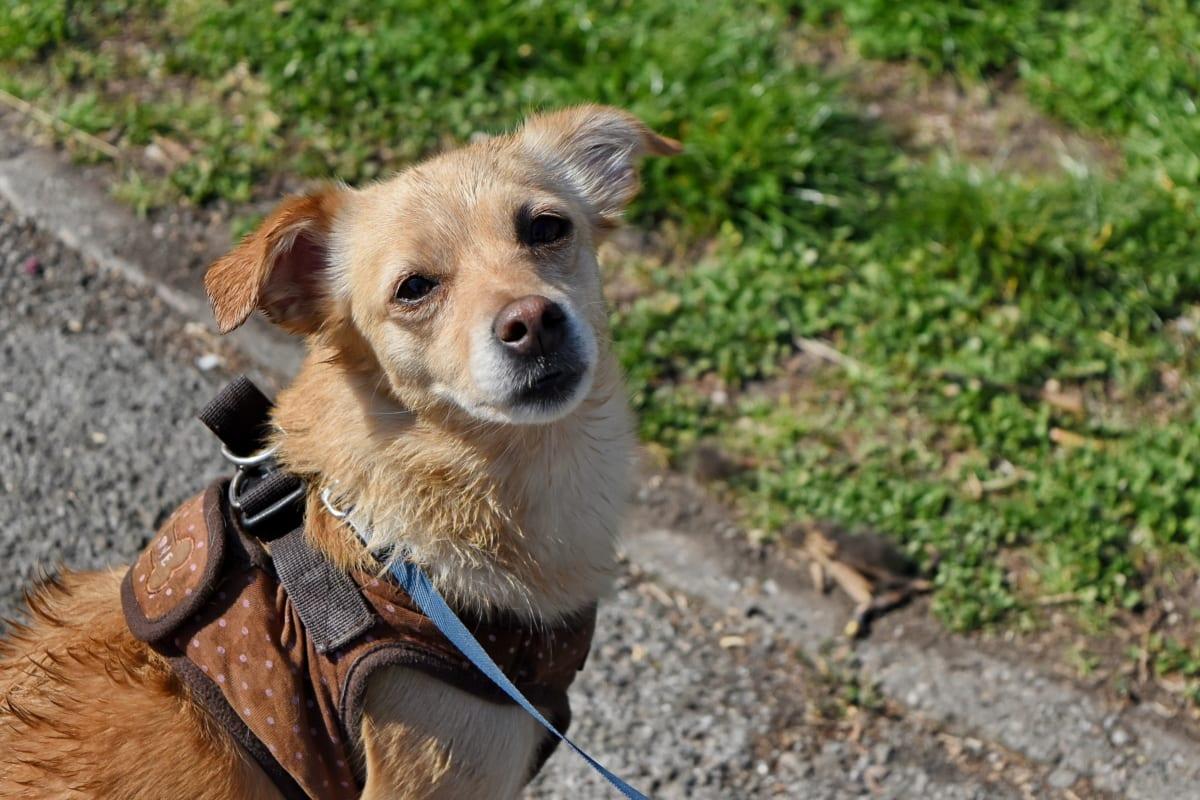 hund, dyr, Nuttet, kæledyr, canine, hvalp, unge, natur
