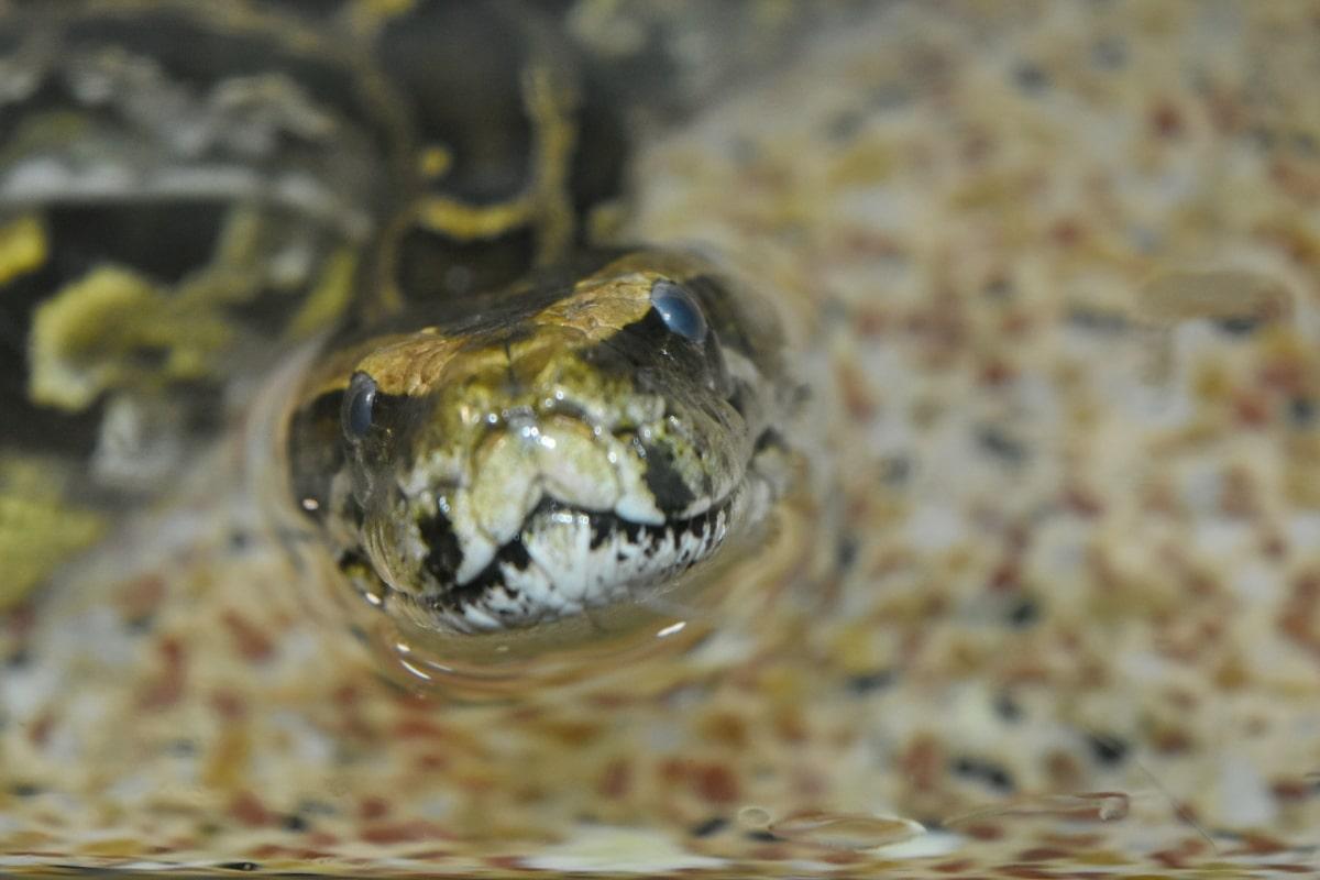 reptile, snake, nature, wildlife, water snake, animal, danger, predator