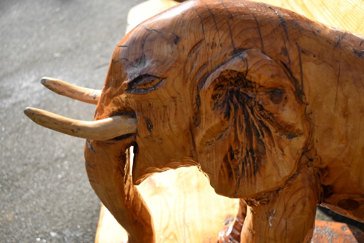 carving, wooden, elephant, portrait, sculpture, nature, art, outdoors