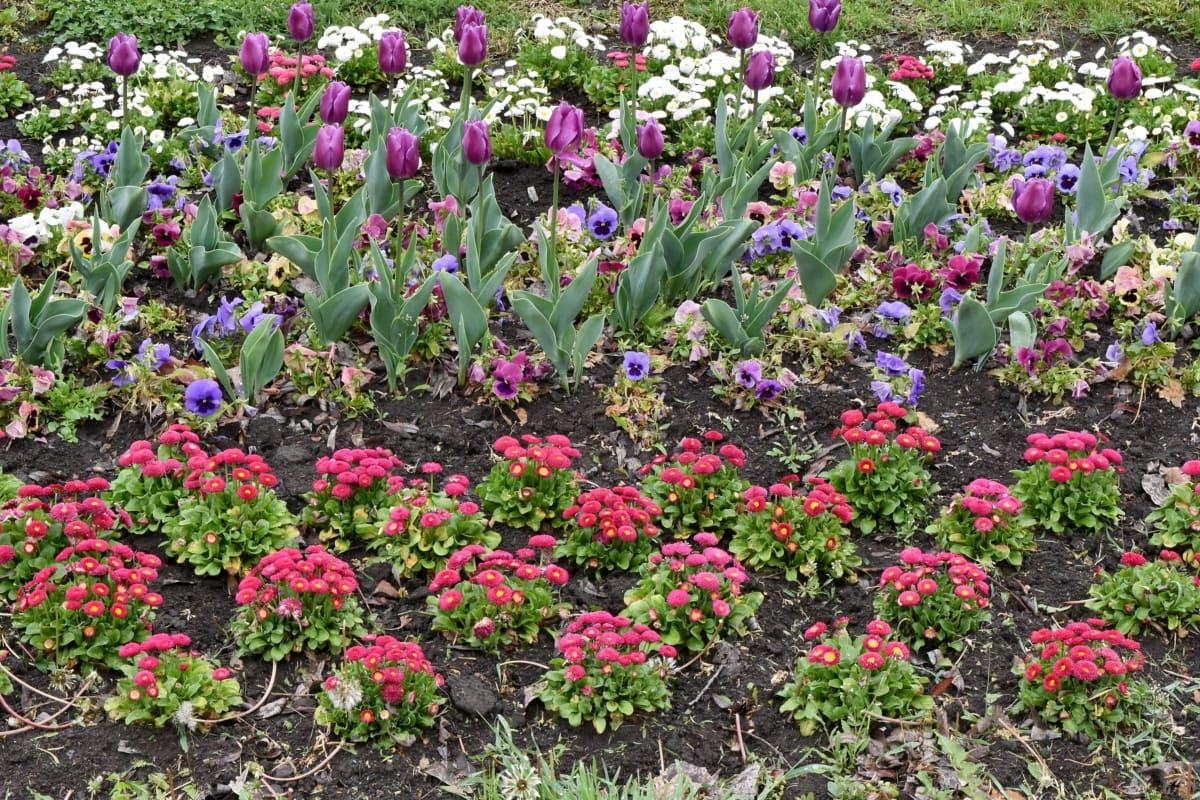 природа, квітка, лист, чагарник, сад, флора, квіти, завод
