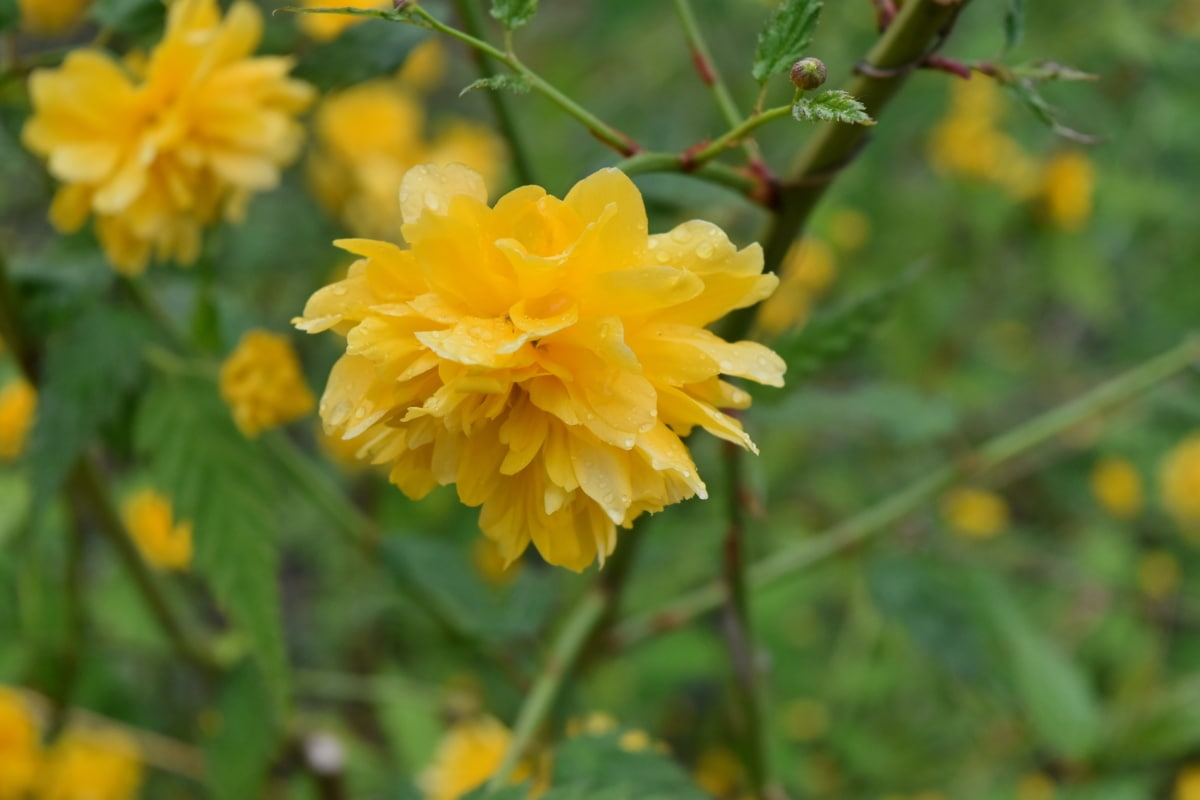 žlutá, bylina, Flora, léto, závod, květ, Příroda, list