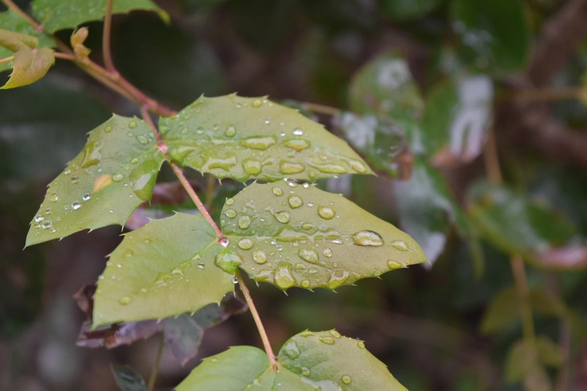 水分, フローラ, 自然, 葉, ツリー, アウトドア, 環境, 色