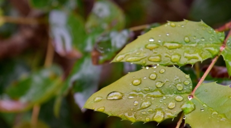 ploaie, natura, flora, frunze, mediu, premier-plan, culoare, gradina