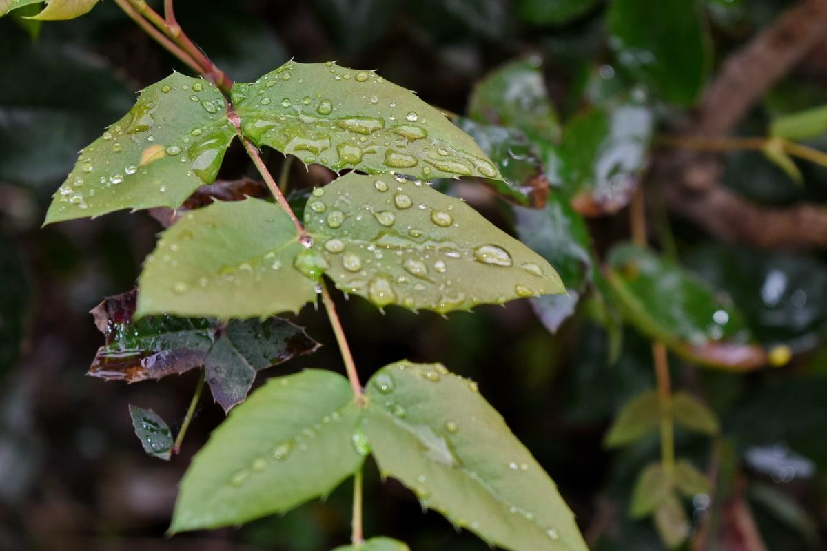 dug, fugt, våd, natur, blad, regn, flora, udendørs