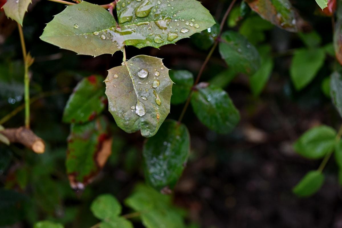 vlhkost, déšť, Příroda, list, Flora, venku, zahrada, Barva