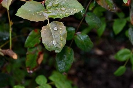 moisture, rain, nature, leaf, flora, outdoors, garden, color