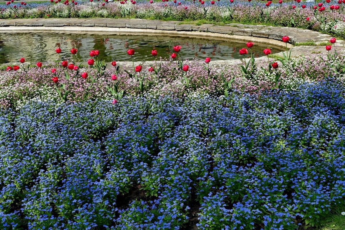 jezero, vrt, priroda, flore, cvijet, biljka, cvatnje, list
