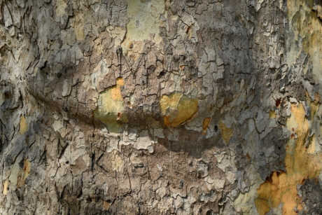 bark, texture, rough, old, pattern, dirty, tree, nature