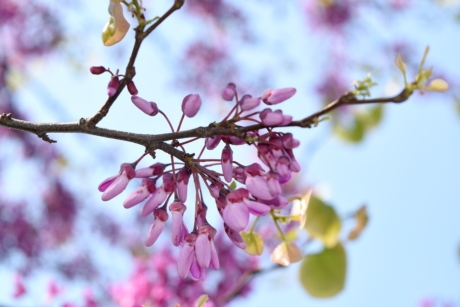 garden, plant, tree, blossom, branch, nature, spring, flower
