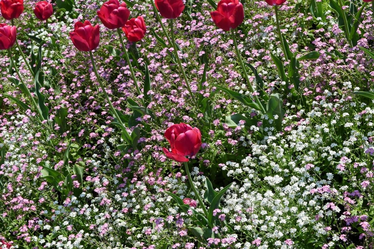 květ, květiny, Příroda, závod, Flora, zahrada, bylina, kvetoucí