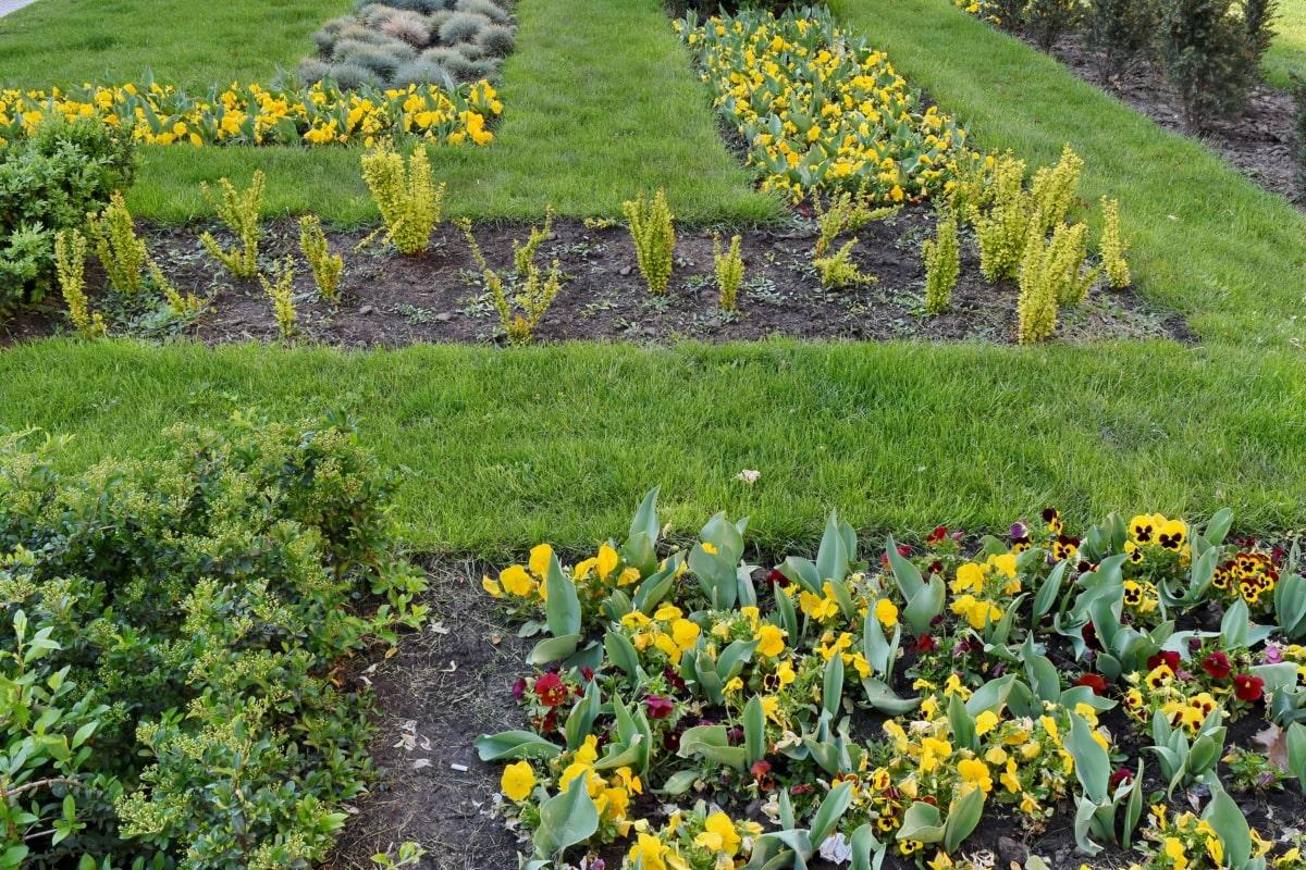 Sprężynowy, pole, kwiaty, zioło, ogród, Natura, roślina, kwiat