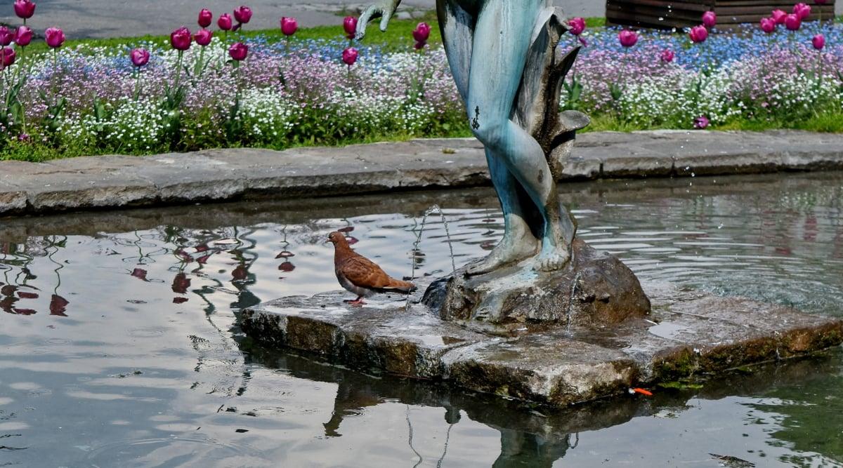 Fontana, vrt, golub, skulptura, voda, priroda, na otvorenom, cvijet