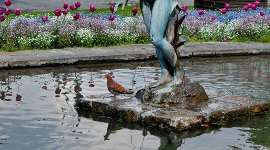 喷泉, 花园, 鸽子, 雕塑, 水, 性质, 户外活动, 花