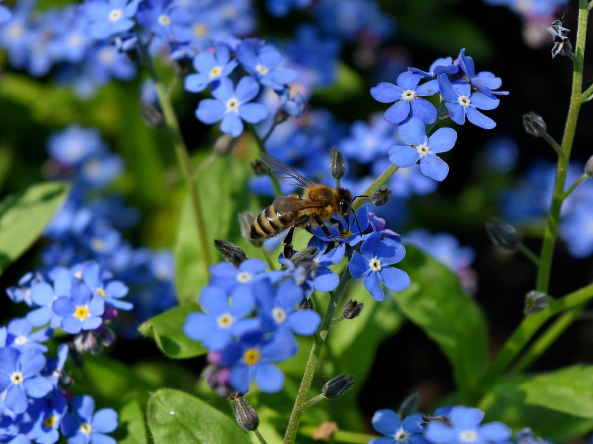 bee, pollen, herb, flowers, nature, flower, garden, leaf