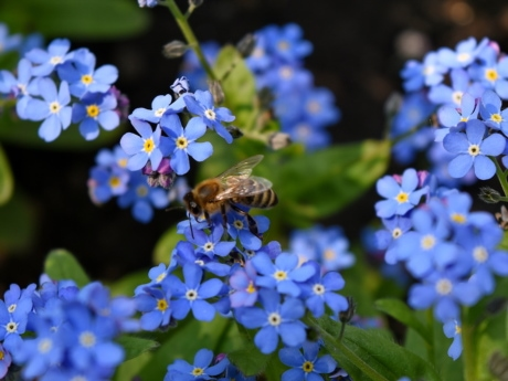 bee, pollination, organism, spring, herb, garden, flowers, flower