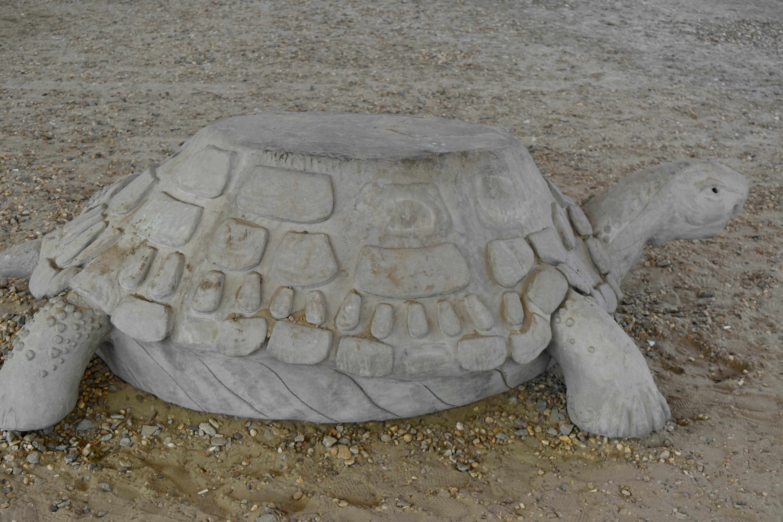 Kostenlose Bild Beton Skulptur Schildkrote Sand Verkleidung Strand Reptil Sommer
