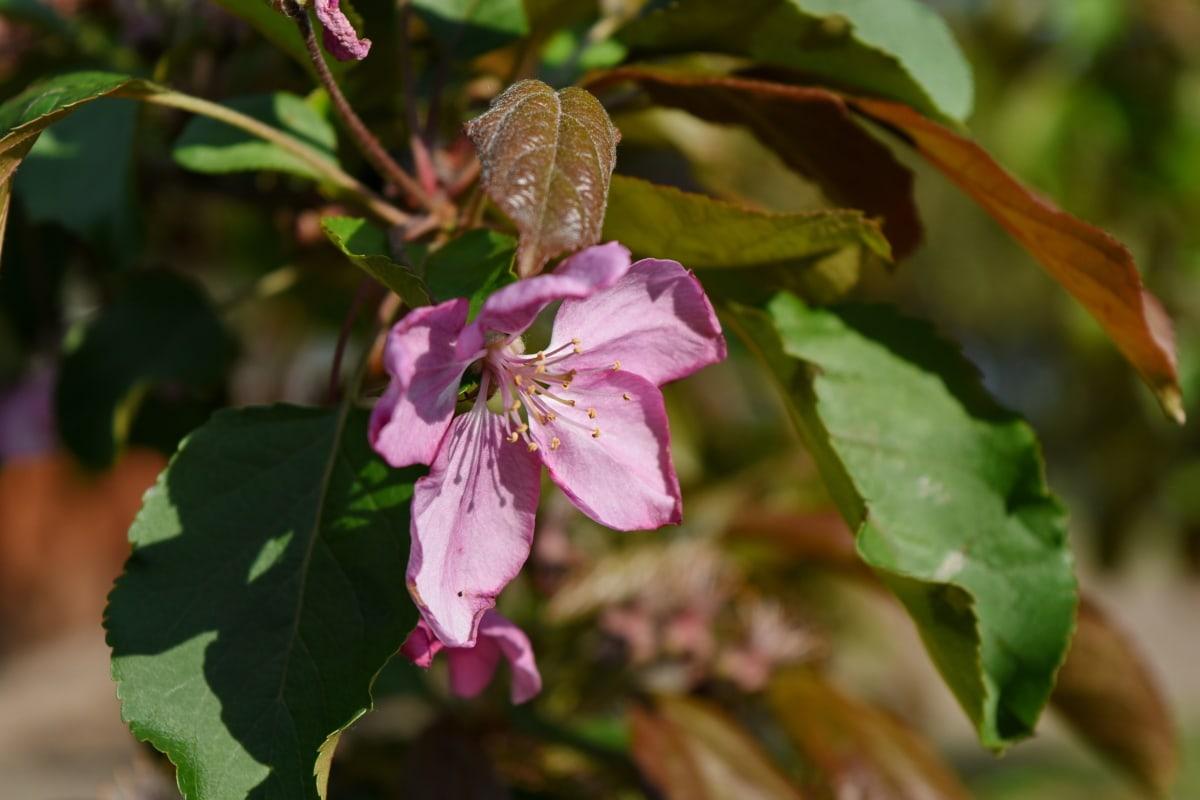 рослина, сад, лист, цвітіння, квітка, природа, Весна, флора