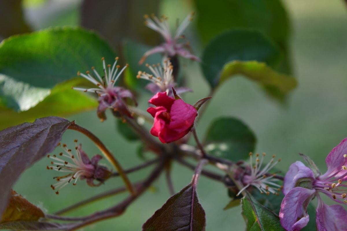 blomsterknop, natur, blomst, busk, træ, blad, haven, farve