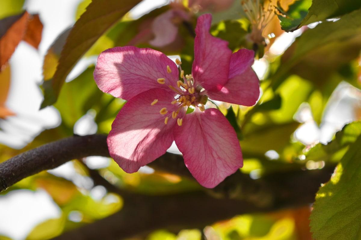 detalj, tučak, pelud, cvijet, priroda, biljka, list, latica