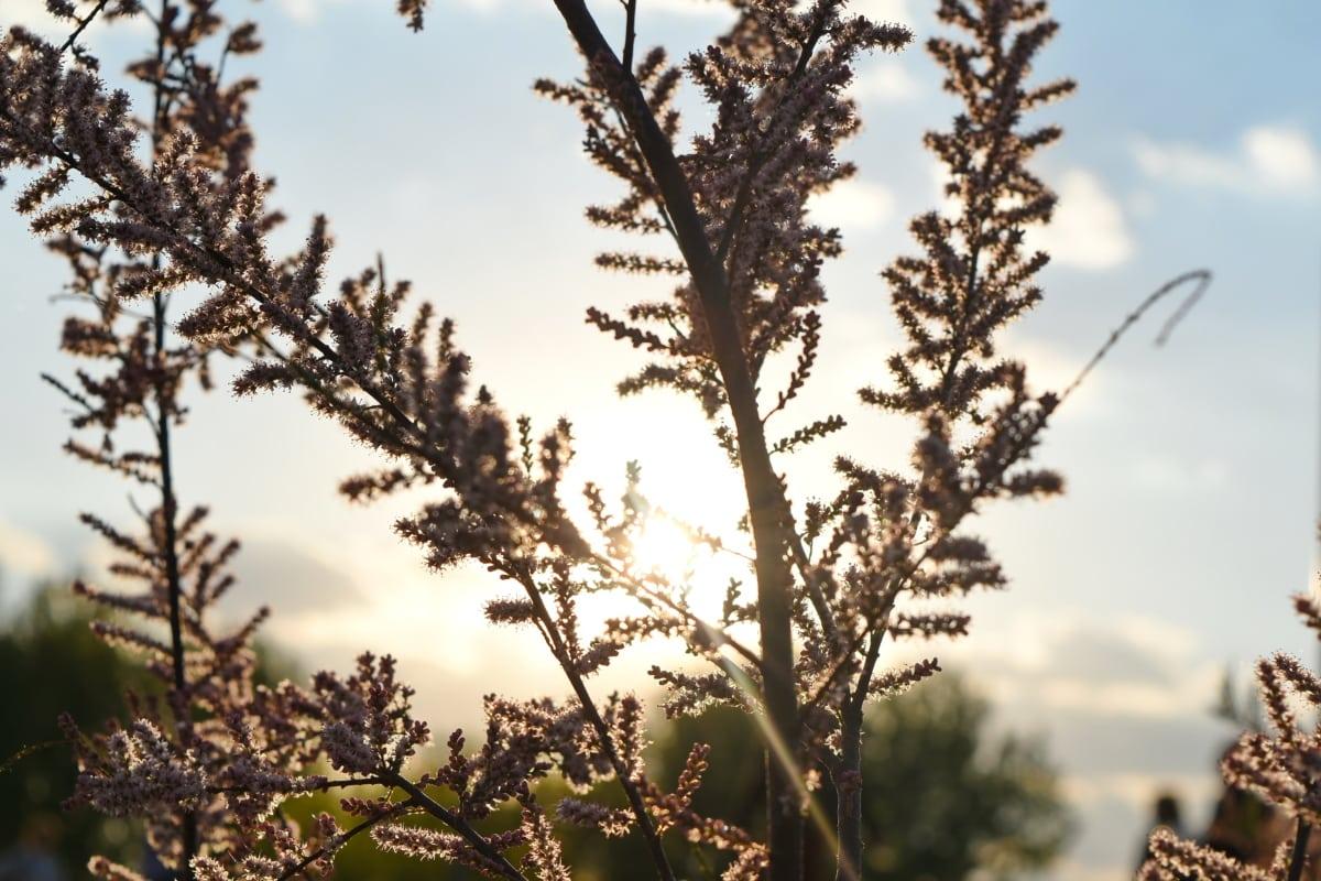 shadow, sunrays, sunshine, tree, flower, outdoors, nature, branch
