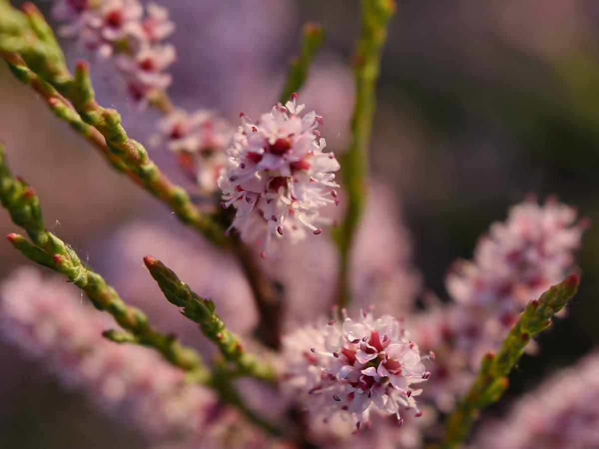 rama, planta, flor, florece, flora, flor, hierba, naturaleza