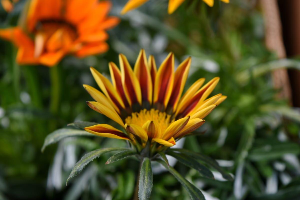 petals, plant, nature, yellow, herb, blossom, petal, flower